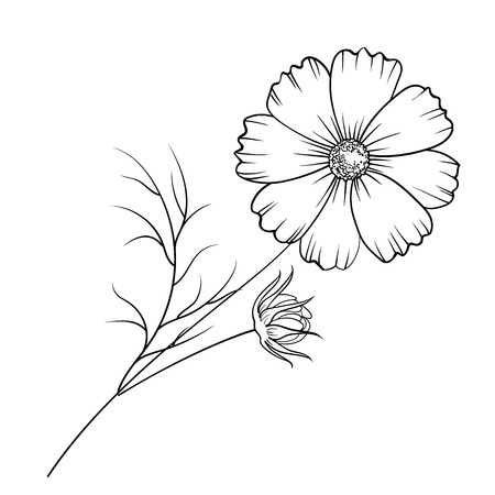 buttercup: Buttercup flower isolated over white. Vector illustration.