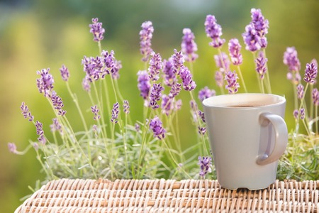 lavendin: Lavender flower composition on field with cup.