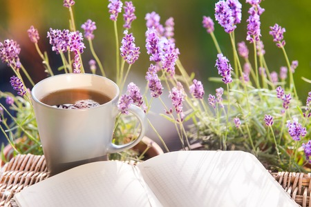 lavander: Lavender flower composition on field with book and cup.
