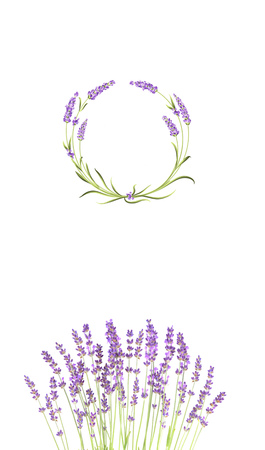 Wreath of lavender. Bunch of lavender on the white background. Lavender flower isolated on white.