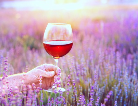 glass of red wine: Close up hand holding a glass. Man holding glass of red wine in front of lavender field. Picnic on the field of spring flowers.