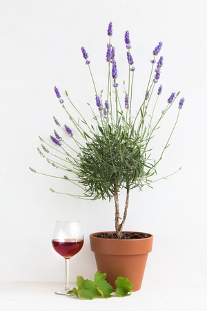 provence: Blooming lavender. Pot of lavender. Red wine glass inside provence interior.