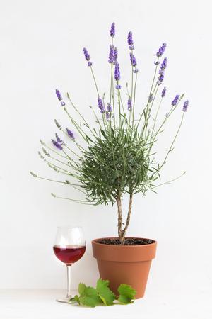 vine border: Blooming lavender. Pot of lavender. Red wine glass inside provence interior.
