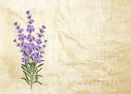outdoor wedding: The lavender elegant card. Vintage postcard background vector template for wedding invitation. Label with lavender flowers. Vector illustration.
