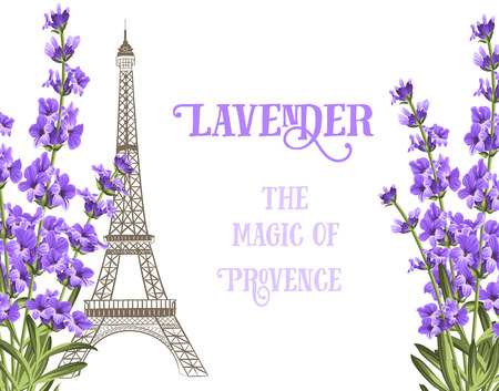 Eiffel tower icon with lavender flowers isolated over white background with sign Lavender te magic of provence. Vector illustration.