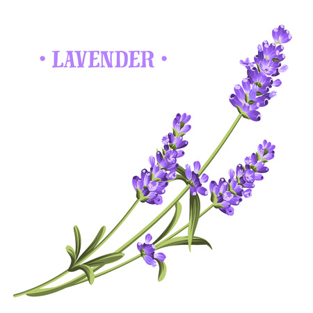 Bunch of lavender flowers on a white background.