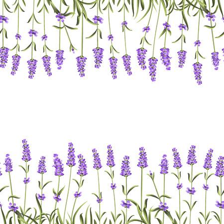 illustraion: The Lavender Seamless frame line. Beauty lavender skin care design. Lavender Oil paern over white background. Vecor illustraion. Illustration