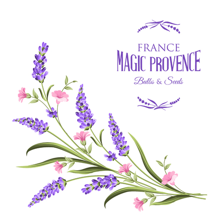 Bunch of lavender flowers on a white background.Botanical illustration. Vintage style. Making gifts of paper and textiles. Vector illustration. Ilustração