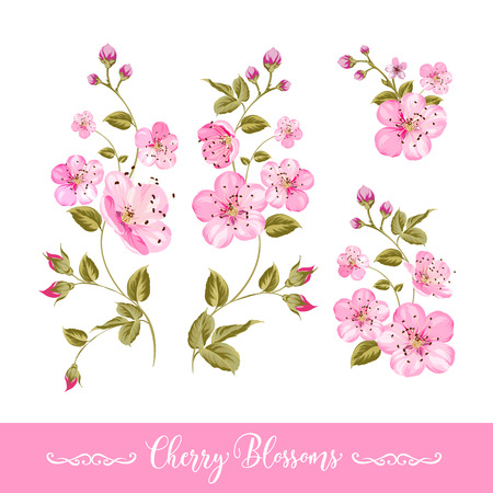 aromatic: Set of sakura flowers elements. Collection of spring flowers on a white . Vector illustration bundle.