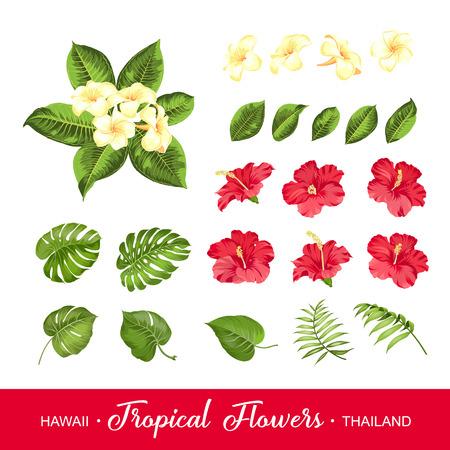 Conjunto de elementos de flores tropicales. Colección de flores en un blanco. ilustración vectorial paquete. Ilustración de vector