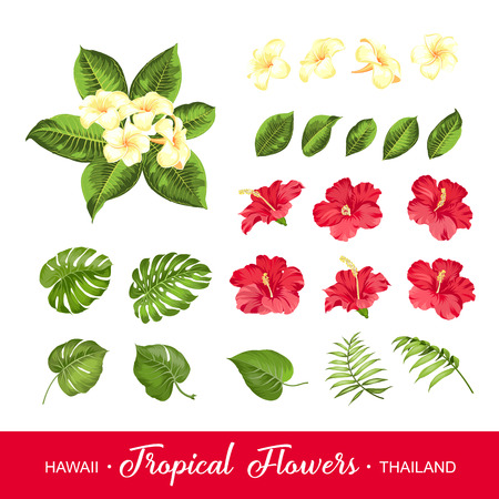 Set of tropical flowers elements. Collection of flowers on a white . Vector illustration bundle. Vettoriali