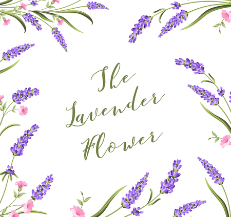 dry flowers: The lavender elegant card with frame of flowers and text. Lavender card for your invitation. Vector illustration.
