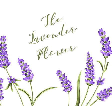 Elegant card with lavender flowers in watercolor paint style. The lavender frame and text. Lavender border for your text presentation. Vector illustration. Illustration