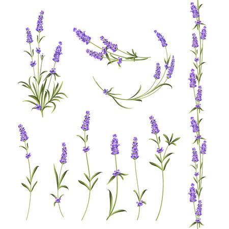 Zestaw elementów kwiatów lawendy. Ilustracja botaniczna. Zbiór kwiatów lawendy na białym tle. Pakiet ilustracji wektorowych. Ilustracje wektorowe