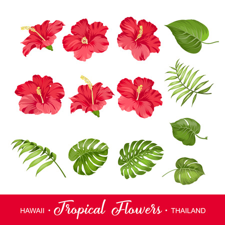 tropical flowers: Set of tropical flowers elements. Collection of hibiscus flowers on a white background. Vector illustration bundle.