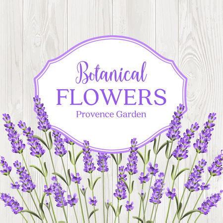 Beauty lavander label design with border over wooden frame. Botanical flowers text isolated over white background. Lavender garland. Vector illustration. Illustration