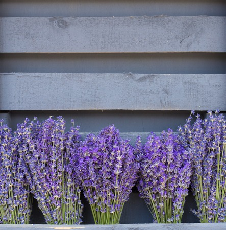 lavendin: Lavandula flowers closeup, violet bouquets over tile wooden wall.