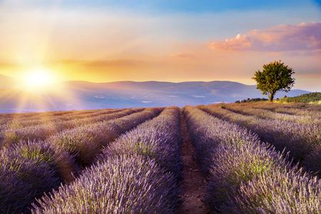 scent: Sunset over a violet lavender field in Provence, France.