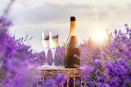 Delicious champagne over lavender flowers field. Violet flowers on the background.