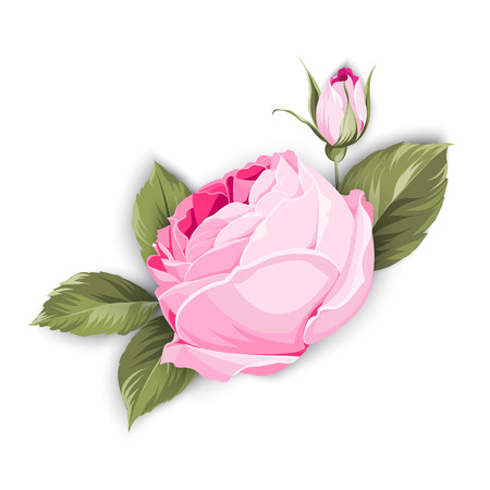 Rose flowers icon illustration. Illustration