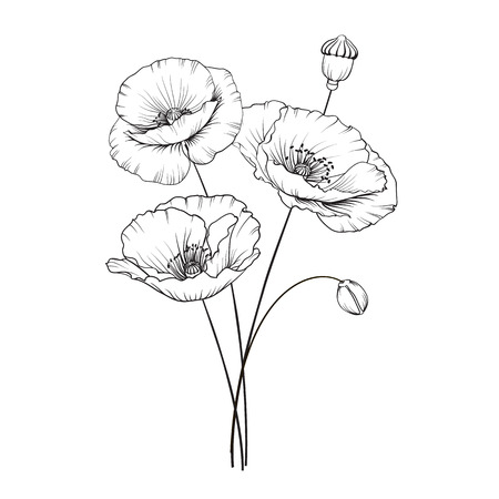 Poppies flowers in black and white Illustration.