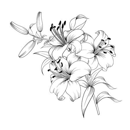 Contour of blooming lily isolated over white background. White lily flower. Wedding romantic bouquet.