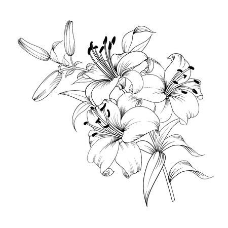 Kontur der blühenden Lilie getrennt über weißem Hintergrund . Weiße Lilienblume . Romantisches Blumenstrauß des Herbstes