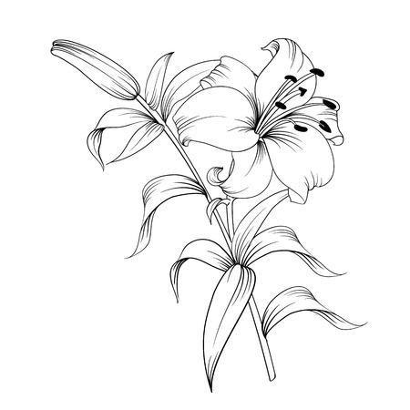 Witte Lelie Geïsoleerd Op Een Witte Achtergrond. Kaart met bloeiende lelie. Vector illustratie Vector Illustratie