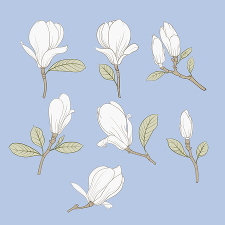 Set of floral elements. Bundle of Linear sketch of Magnolia Flowers. Collection of Hand drawn style black and white line illustrations on a white background. Vector illustration Ilustração