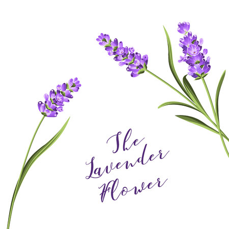 The lavender wreath with bouquet of flowers and text. Lavender blossom for marriage invitation. Frame with lavender flowers. Vector illustration. Vettoriali