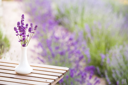 Lavender flower composition on field with vase and basket. Sunset gleam over purple flowers of lavender. Provence region of france. Stock Photo