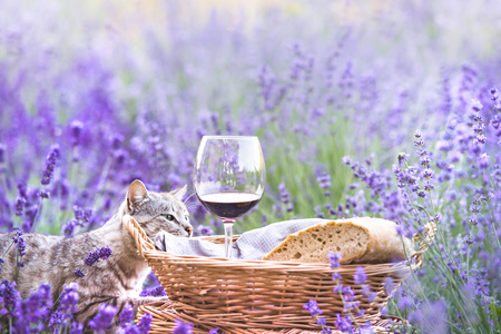Red wine bottle and wine glass. Bottle of wine against lavender landscape. Blue sky over lavender field in Provence, France.