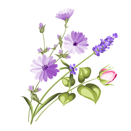 The chicory garland with rose and lavender botanical card. A summer decorative bouquet of endive and rose flowers. Small floral garland. Vector illustration. Stock Illustratie