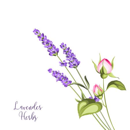Label with roses and lavender. Bunch of summer flowers on a white background. Botanical illustration in vintage style. Sign lavender herbs in left bottom corner. Vector illustration