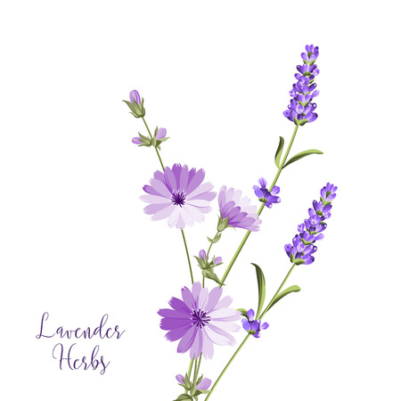 Label with lavender and endive. Bunch of summer flowers on a white background. Botanical illustration in vintage style. Sign lavender herbs in left bottom corner. Vector illustration. Stockfoto - 104951413