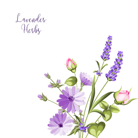 Label with lavender. Bunch of lavender flowers on a white background. Botanical illustration in vintage style with sign Lavender herbs.