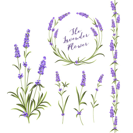 Set of lavender flowers elements. Collection of lavender wreaths, bouquets and branches on a white background. Vector Botanical illustration bundle.