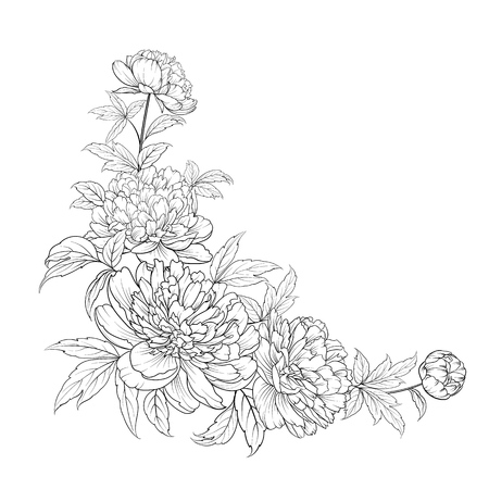 Peonies ink background. Vector illustration