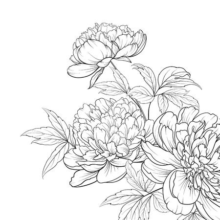Ramo de flores de primavera de guirnalda de peonía. Invitación de boda con flores sobre fondo blanco. Ilustración de vector.