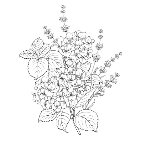 Floral design of lavender and hydrangea isolated over white background. Spring bouquet of flowers in line sketch style. Vector illustration Иллюстрация