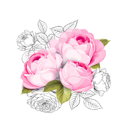The Blooming Rose with couple of small flowers. Botanical vector illustration. Awesome single flower bouquet of roses iolated on white background. Vector illustration.