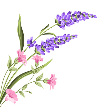 Elegant card with lavender flowers in watercolor paint style. The lavender frame and text. Lavender bouquet for your text presentation. Vector illustration.  イラスト・ベクター素材