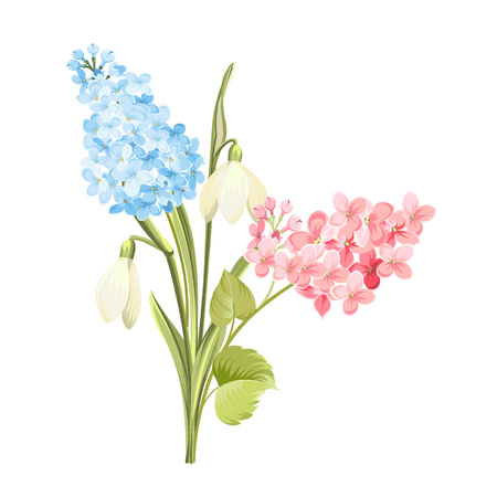 Purple Lilac flowers of syringa and white galanthus. Botanical illustration for spring bouquet. Spring time concept card with blooming flowers isolated over white background. Vector illustration.