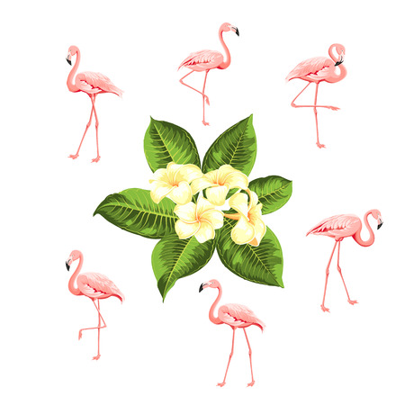 Tropical birds and flowers collection. Pink flamingos set. Plumeria flowers kit. Fashion summer print bundle. Elements for invitation card and your template design. Vector illustration. Stock Illustratie