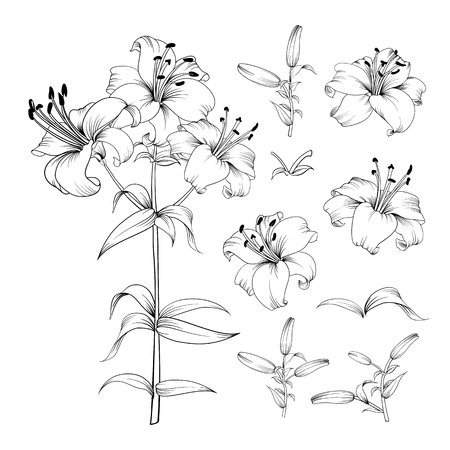 Collection of lily flowers elements. Awesome set for designers. Blossom jungle flower bundle. Black flowers of lilies isolated over white. Flowers contours collection. Vector illustration.