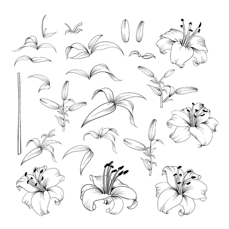 Collection of lily flowers. Awesome set for designers. Waterlily blossom bundle. Black flowers of lilies isolated over white. Flowers contours collection. Vector illustration.