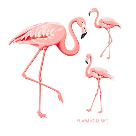 Kolekcja tropikalnych ptaków. Zestaw różowe flamingi. Pakiet z modnym letnim nadrukiem. Elementy karty z zaproszeniem i projekt szablonu. Ilustracja wektorowa.