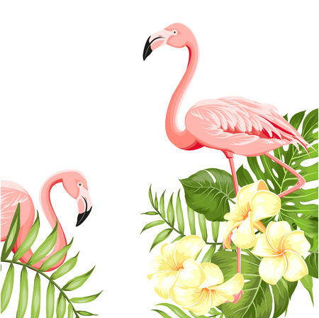 Flamingo bird and plumeria flowers isolated over white background. Tropical birds and flowers illustration. Fashion summer print for invitation card and your template design. Vector illustration