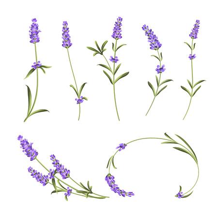 Provence-Blumen-Kollektion. Set von Lavendelblütenelementen. Violette Blumen-Set. Mode-Sommer-Druckpaket. Elemente für Einladungskarte und Ihr Vorlagendesign. Vektor-Illustration.