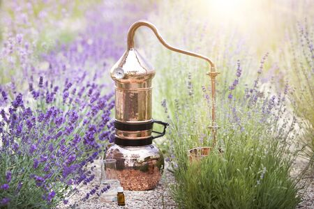Distilling apparatus alembic with esential oil between of lavender field lines.